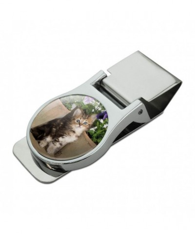 Ragdoll Tiffany Kitten Flower Chrome